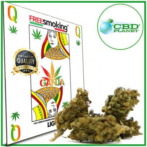 Queen Cannabis
